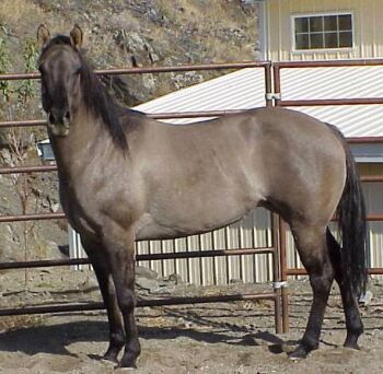 Color-Grulla.jpg (31832 bytes)